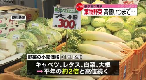 野菜、高値.PNG